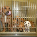 HSS: Fostering Saves Lives!