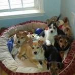 HSS: Animals for Adoption & Adoption Event(s)